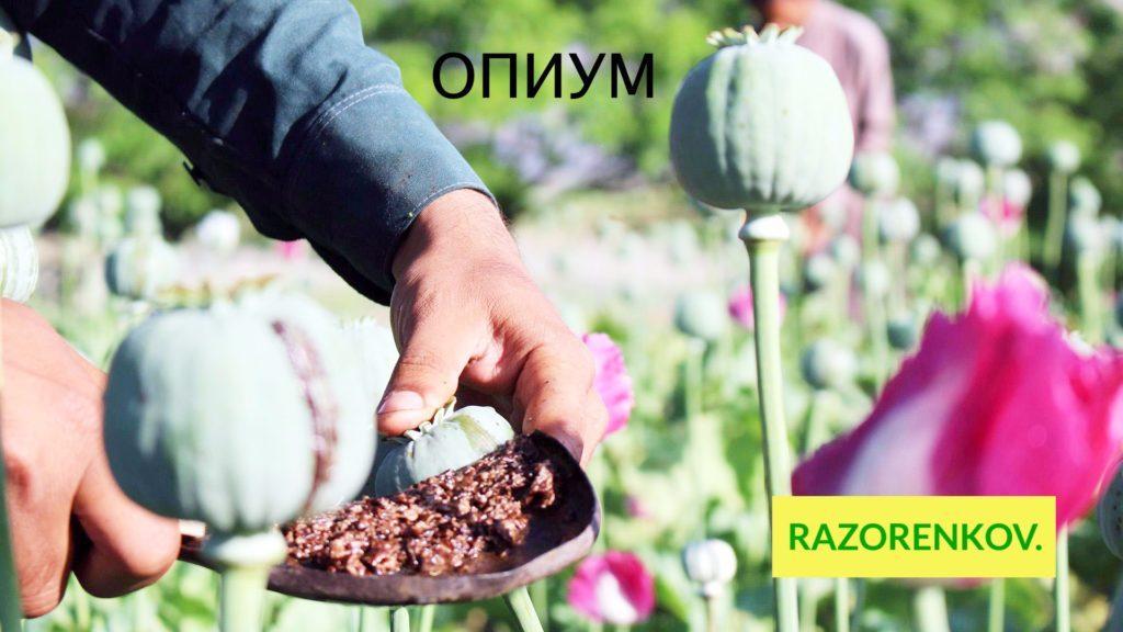 opium-narkotik